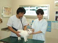 ペット検診